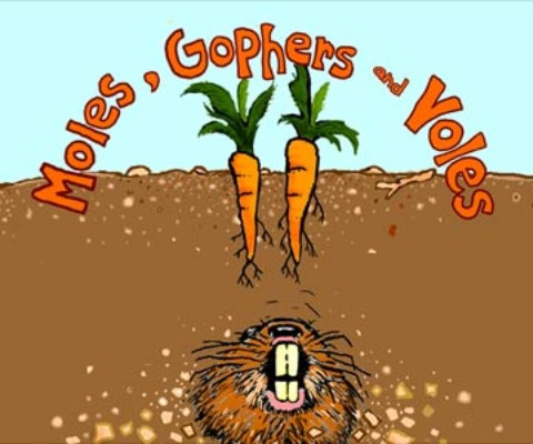 Moles, Gophers and Voles! Oh My!
