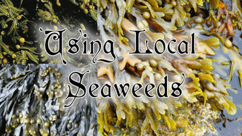 Using Local Seaweeds: May 22nd 7-9pm