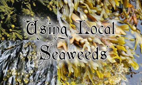 Using Local Seaweeds: May 22nd 7-9pm