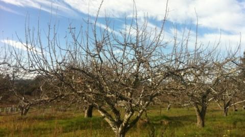 Winter Tree Pruning Workshop
