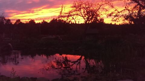 Pond Sunset
