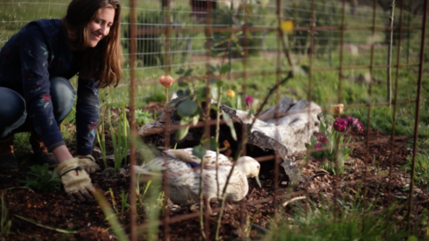 Gardening with Ducks!